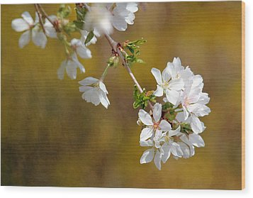 Wood Print featuring the photograph Cherry Blossoms by Trina  Ansel