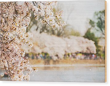 Wood Print featuring the photograph Cherry Blossoms In Washington Dc by Vizual Studio
