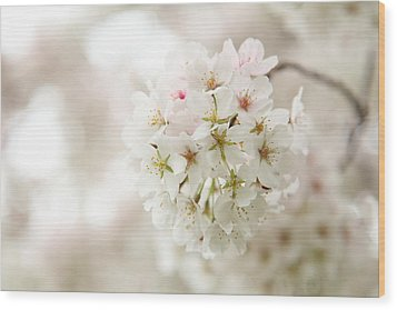 Cherry Blossoms - Washington Dc - 0113101 Wood Print by DC Photographer