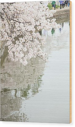 Cherry Blossoms - Washington Dc - 0113105 Wood Print by DC Photographer