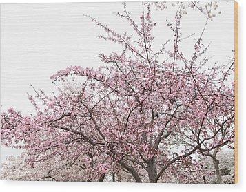 Cherry Blossoms - Washington Dc - 0113123 Wood Print by DC Photographer