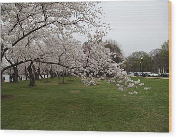 Cherry Blossoms - Washington Dc - 0113130 Wood Print by DC Photographer