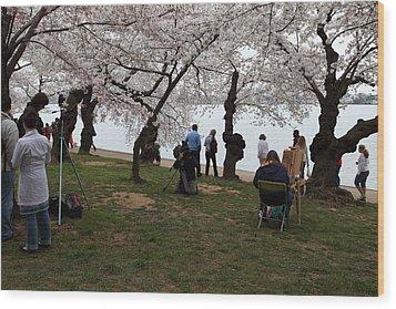 Cherry Blossoms - Washington Dc - 0113132 Wood Print by DC Photographer