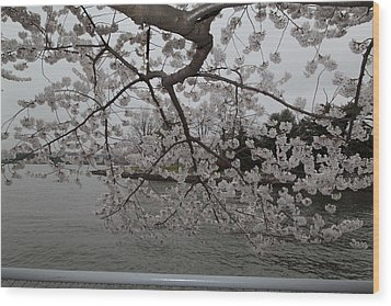 Cherry Blossoms - Washington Dc - 0113134 Wood Print by DC Photographer