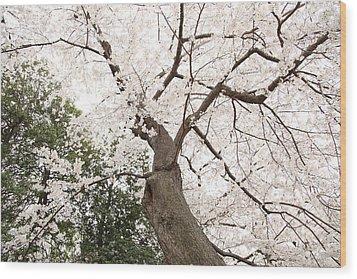 Cherry Blossoms - Washington Dc - 0113136 Wood Print by DC Photographer