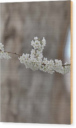 Cherry Blossoms - Washington Dc - 011355 Wood Print by DC Photographer
