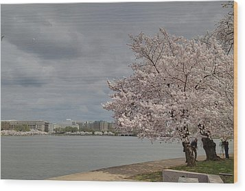 Cherry Blossoms - Washington Dc - 011362 Wood Print by DC Photographer
