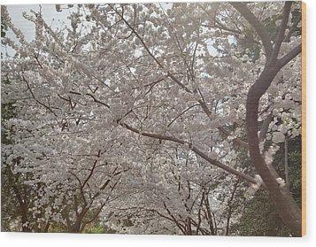 Cherry Blossoms - Washington Dc - 011363 Wood Print by DC Photographer