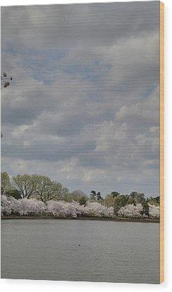 Cherry Blossoms - Washington Dc - 011365 Wood Print by DC Photographer