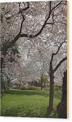 Cherry Blossoms - Washington Dc - 011369 Wood Print by DC Photographer