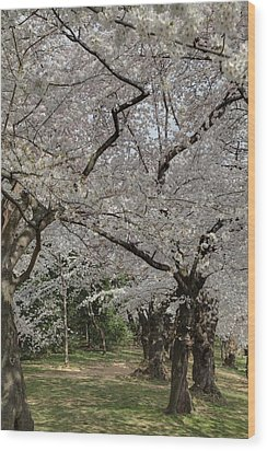 Cherry Blossoms - Washington Dc - 011374 Wood Print by DC Photographer