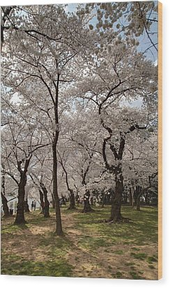 Cherry Blossoms - Washington Dc - 011378 Wood Print by DC Photographer