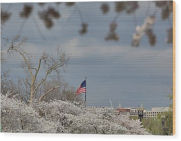 Cherry Blossoms - Washington Dc - 011381 Wood Print by DC Photographer