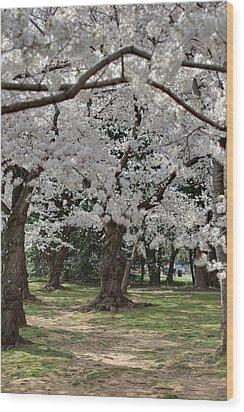 Cherry Blossoms - Washington Dc - 011383 Wood Print by DC Photographer