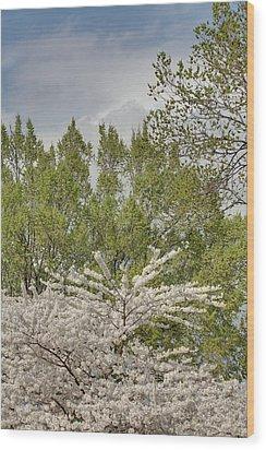 Cherry Blossoms - Washington Dc - 011388 Wood Print by DC Photographer