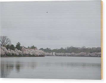 Cherry Blossoms - Washington Dc - 011397 Wood Print by DC Photographer