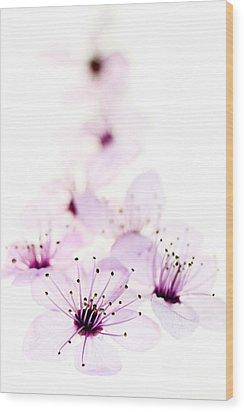 Cherry Cascade Wood Print by Rebecca Cozart