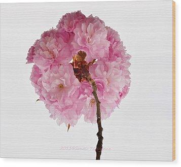 Cherry Globe Wood Print by Sonali Gangane