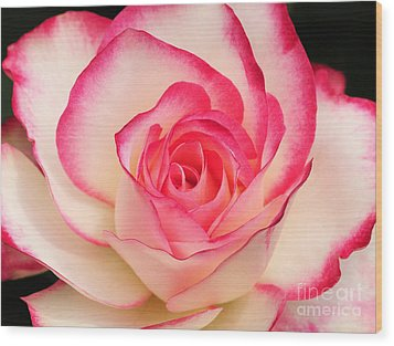 Cherry Parfait Rose Wood Print by Olivia Hardwicke