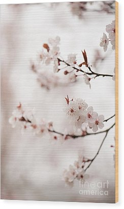 Cherry Plum Blossom Wood Print by Anne Gilbert