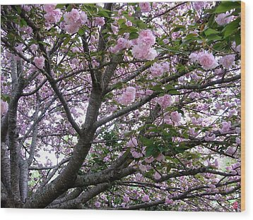 Cherry Tree 3 Wood Print by Mimi Saint DAgneaux