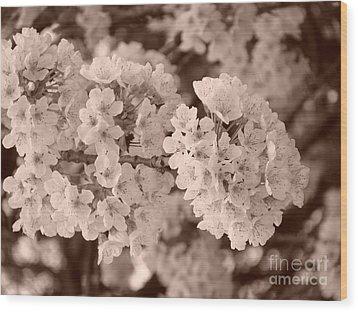 Cherry Tree Blossom Wood Print