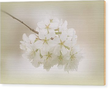 Cherry Tree Blossoms Wood Print by Sandy Keeton