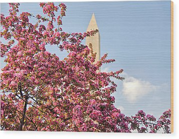 Cherry Trees And Washington Monument One Wood Print