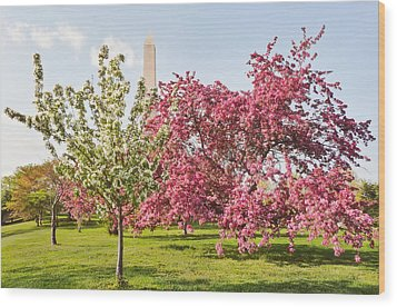 Cherry Trees And Washington Monument Three Wood Print by Mitchell R Grosky