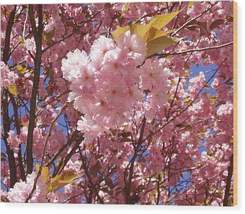 Cherry Trees Blossom Wood Print
