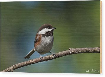 Chestnut Backed Chickadee Perched On A Branch Wood Print by Jeff Goulden