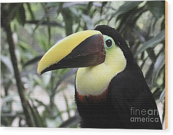 Wood Print featuring the photograph Chestnut-mandibled Toucan by Teresa Zieba