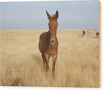 Chestnut Mule In Gold Wood Print