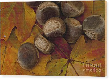 Chestnuts And Fall Leaves Wood Print by Wilma  Birdwell