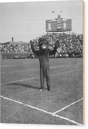 Chicago Bears Mascot In Front Of Wrigley Field Scoreboard Wood Print by Retro Images Archive