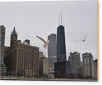 Chicago Birds 2 Wood Print