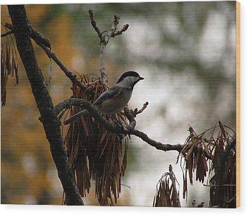 Chickadee In A Tree Wood Print