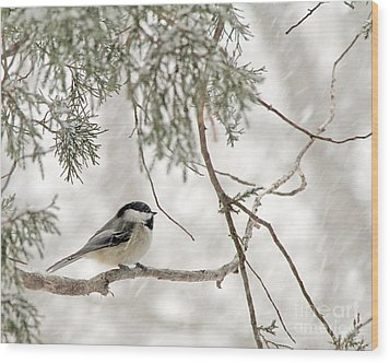 Chickadee In Snowstorm Wood Print