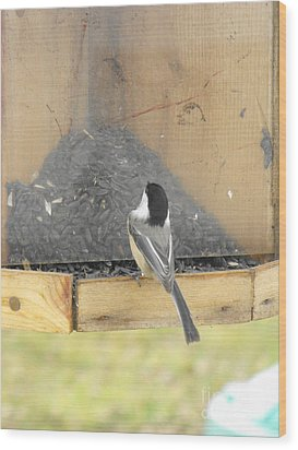 Chickadee Eating Lunch Wood Print