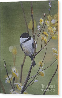 Chickadee  Wood Print by Margit Sampogna