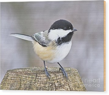Chickadee On A Used To Be Tree Wood Print by Heather King