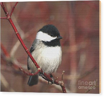 Wood Print featuring the photograph Chickadee by Susan  Dimitrakopoulos