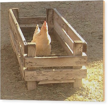 Wood Print featuring the photograph Chicken In A Box by Cristophers Dream Artistry