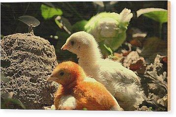 Wood Print featuring the photograph Cute Chicks by Salman Ravish