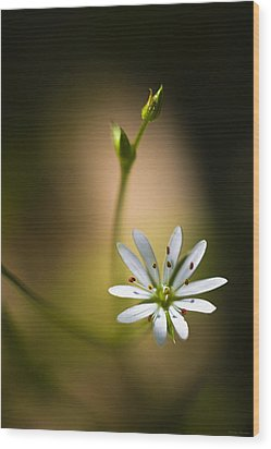 Chickweed Blossom And Bud Wood Print by Marty Saccone