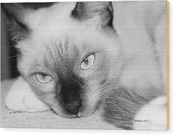 Wood Print featuring the photograph Chico by Dick Botkin