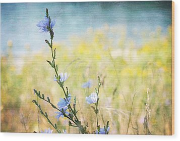 Wood Print featuring the photograph Chicory By The Beach by Peggy Collins