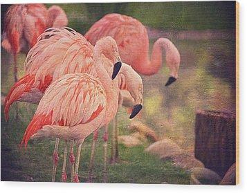 Chilean Flamingos  Wood Print by Maria Angelica Maira