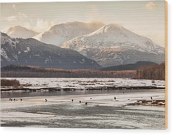 Chilkat Bald Eagle Preserve In Winter Wood Print