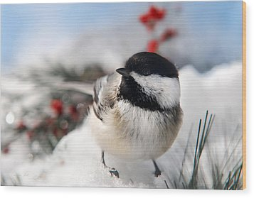 Chilly Chickadee Wood Print by Christina Rollo